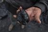 Карабалтинцы жалуются на дефицит угля