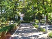 В Бишкеке посадят 10 тысяч молодых лиственных деревьев