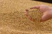 Мировые запасы зерновых на конец сезонов в 2018 году достигнут нового рекордного показателя в 720,5 млн. тонн