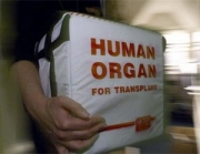 Глава Минздрава лоббирует закон о транспалнтации?