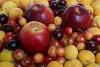 Южные фрукты в больших объемах – не проблема!