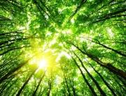 Лес рубят, деньги летят