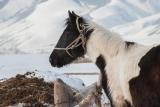 Кыргызские лошадки #глазамифедорова