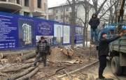 Остановите вырубку городских деревьев!