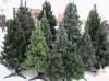 Где в Бишкеке купить живую елку?