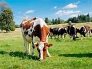 В стране в пять раз сократилось количество людей, заражающихся от животных