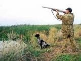 Департамент охоты могут ликвидировать