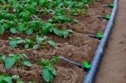 Втрое увеличилось число хозяйств, применяющих капельное орошение