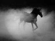 Не выборы, а зоопарк…. – Политолог о «черных лошадках» и «чайках» президентской гонки