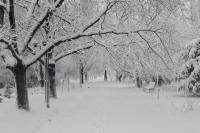 В Бишкеке продолжится снегопад