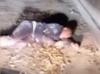 МВД ищет мужчину в форме, который в День милиции лежал пьяный в грязи