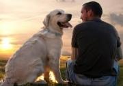 Собаки точно понимают человеческую речь!