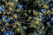 Ботанический сад. Весна