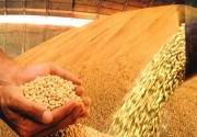 Мешают ли мукомолы Кыргызстану получить кредит МВФ?