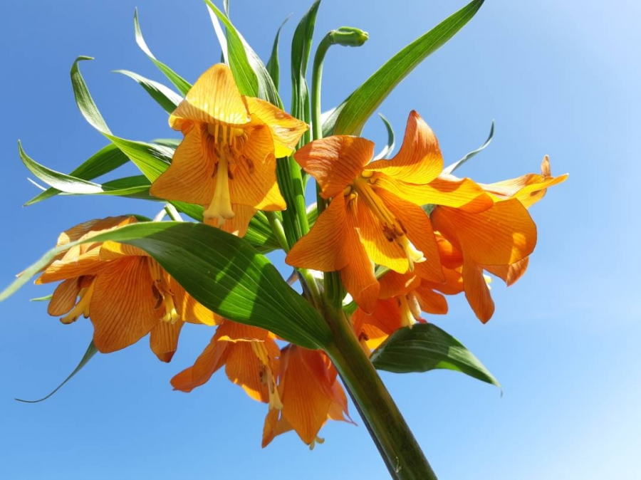 цветок айгуль в картинках ознакомиться
