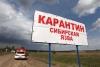 В КР, судя по сообщениям россиян, зафиксирована вспышка сибирской язвы