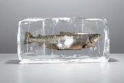 Лед отдельно – рыба отдельно